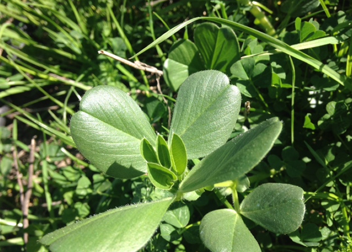 オリーブと共に様々な植物が育ちます。